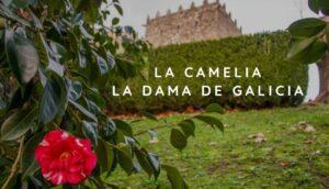 La camelia en Galicia