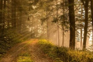nature-3725725_960_720