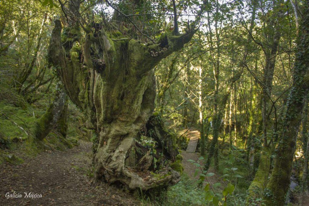 Bosque en el río Gorgua