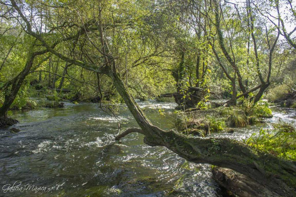 Río Miño en Ombreiro