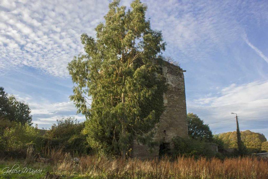 Eucalipto y castillo de Sobrado