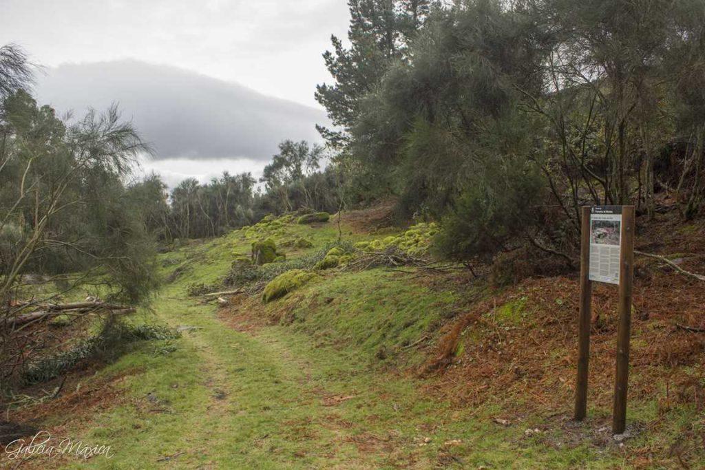 Camino de acceso a los chozos