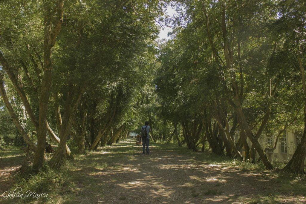 Paseo dos Buxos