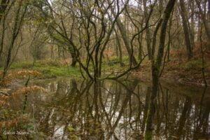 Laguna de las Minas de Fillaboa