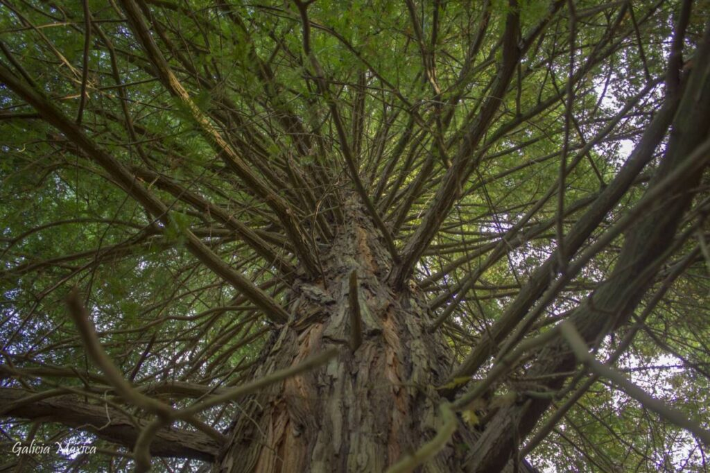 copa de árbol